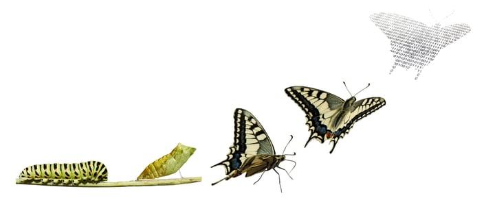 Digital Transformation is like Metamorphosis